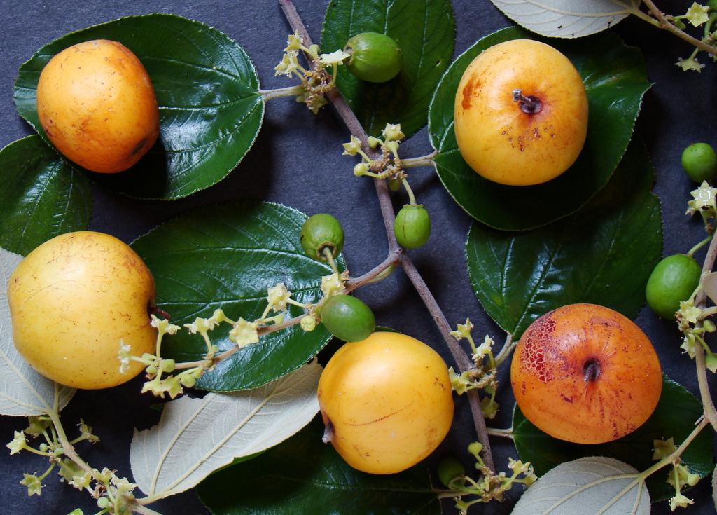 Image result for indian ber