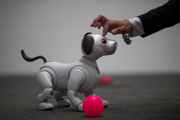 Aibo is primarily a toy, its artificial-intelligence capabilities and robotic architecture can be used to create machines for various service fields. Photo: AFP